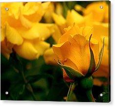 Friendship Roses Acrylic Print by Rona Black