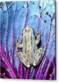 Frog On Cabbage Acrylic Print by Jean Noren