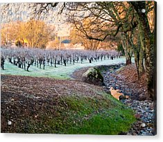 Frost In The Valley Acrylic Print by Bill Gallagher
