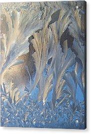 Frost On The Window Pane Acrylic Print by Joy Nichols