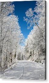 Frosted Winter Acrylic Print by John Haldane