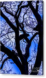 Frosty Blue Abstract Acrylic Print by Mitch Shindelbower