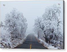 Frozen Trees Acrylic Print by Darren  White