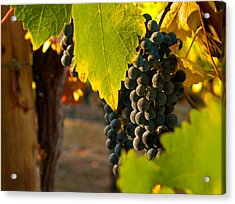 Fruit Of The Vine Acrylic Print by Bill Gallagher