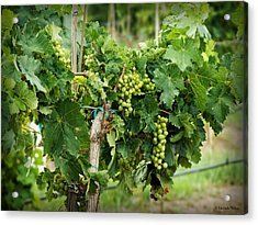 Fruit On The Vine Acrylic Print by Lucinda Walter