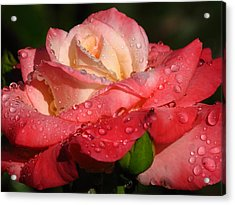 Full Bloom Acrylic Print by Juergen Roth
