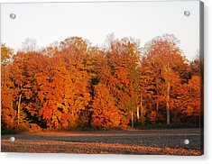 Full Colour Morning Acrylic Print by Sheila Byers