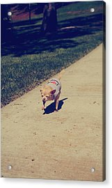 Full Speed Ahead Acrylic Print by Laurie Search