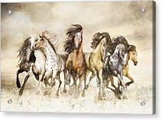 Galloping Horses Magnificent Seven Acrylic Print by Shanina Conway