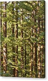 Garcia's Redwoods Acrylic Print by Larry Darnell