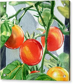 Garden Cherry Tomatoes  Acrylic Print by Irina Sztukowski