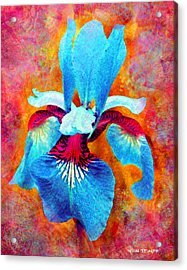Garden Fiesta Acrylic Print by Moon Stumpp