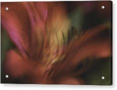 Garden Impression 44 Acrylic Print by Charles Garrett