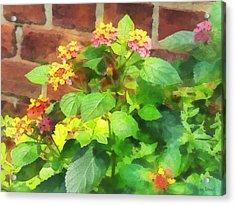 Gardens - Lantana Against Brick Wall Acrylic Print by Susan Savad
