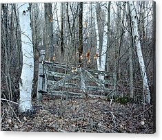 Gate And Birches Acrylic Print by Randi Shenkman