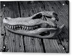 Gator Black And White Acrylic Print by Garry Gay