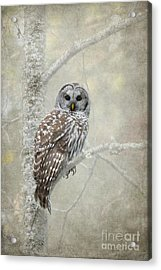 Guardian Of The Woods Acrylic Print by Beve Brown-Clark Photography