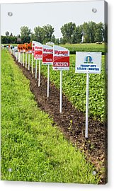 Genetically Modified Crop Signs Acrylic Print by Jim West