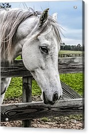 Gentle Beauty Acrylic Print by CarolLMiller Photography
