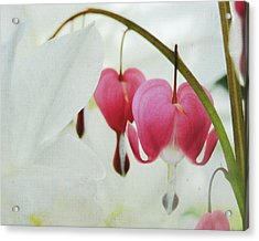 Gentle Heart Acrylic Print by Ginger Denning