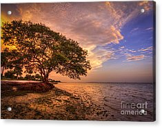 Gentle Whisper Acrylic Print by Marvin Spates