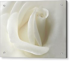 Gentle White Rose Flower Acrylic Print by Jennie Marie Schell