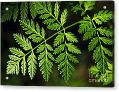 Gereric Vegetation Acrylic Print by Carlos Caetano