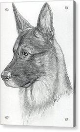 German Shepherd Acrylic Print by Lorah Buchanan