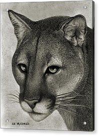 Ghost Cat Acrylic Print by Miki Krenelka