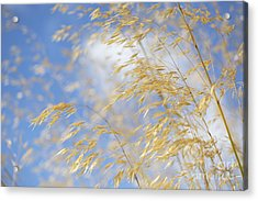 Giant Feather Grass Acrylic Print by Tim Gainey