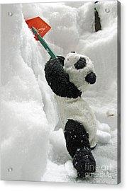 Ginny The Baby Panda In Winter #01 Acrylic Print by Ausra Huntington nee Paulauskaite