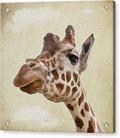 Giraffe Close Up Acrylic Print by Svetlana Sewell