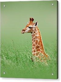 Giraffe Lying In Grass Acrylic Print by Johan Swanepoel