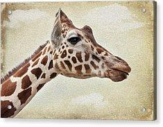 Giraffe Acrylic Print by Svetlana Sewell