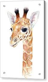 Giraffe Watercolor Acrylic Print by Olga Shvartsur
