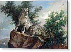 Glamorous Friendship- Snow Leopards Acrylic Print by Svitozar Nenyuk