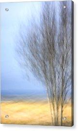 Glimpse Of Trees Sand And Beach Acrylic Print by Carol Leigh