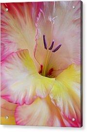 Glorious Gladiola Flower Acrylic Print by Jennie Marie Schell