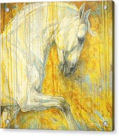 Glorious Lipizzaner  Acrylic Print by Silvana Gabudean