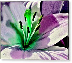 Glowing Lily Heart  Acrylic Print by Danielle  Parent