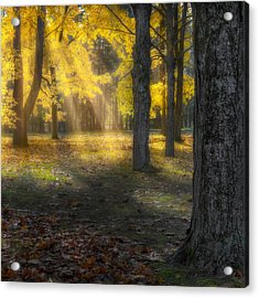 Glowing Maples Square Acrylic Print by Bill Wakeley