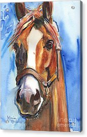 Horse Painting Of California Chrome Go Chrome Acrylic Print by Maria's Watercolor