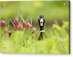 Go Home Duck You're Drunk Acrylic Print by Roeselien Raimond