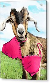 Goat Art - Oh You're Home Acrylic Print by Sharon Cummings