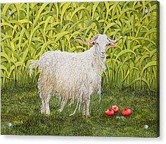 Goat Acrylic Print by Ditz