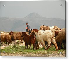 Goat Herder In Jordan Valley Acrylic Print by Noreen HaCohen