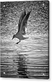 Going Fishing Acrylic Print by Stelios Kleanthous