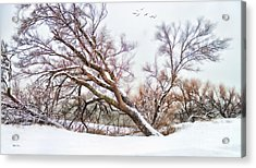 Going Softly Into Winter Acrylic Print by Betty LaRue