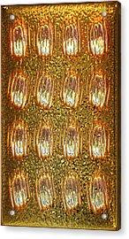Gold Panel 05 Acrylic Print by Li   van Saathoff