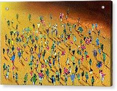 Gold Rush Acrylic Print by Neil McBride